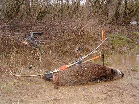 comment chasser le lievre a l arc
